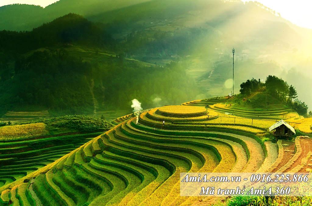 AmiA 360 - Tranh quê hương phong cảnh ruộng bậc thang 1 tấm khổ lớn