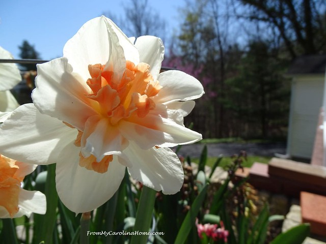 April in the Garden at From My Carolina Home