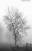 Nebel by Cathérine1