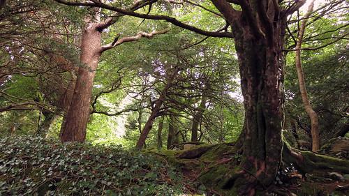 Path through in Killarney National Park, Ireland
