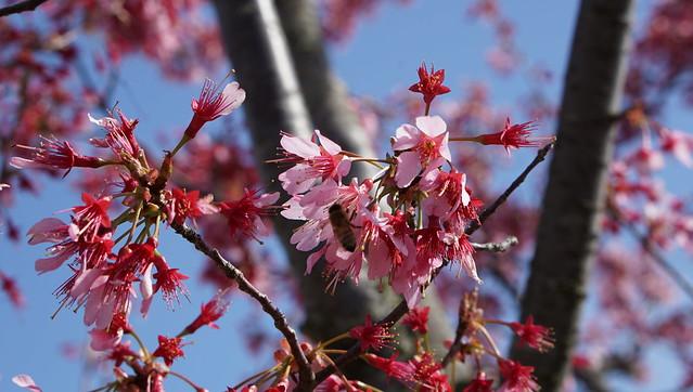 DSC07462花菜ガーデン