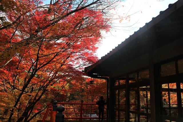 imakumanokannonji-koyo049