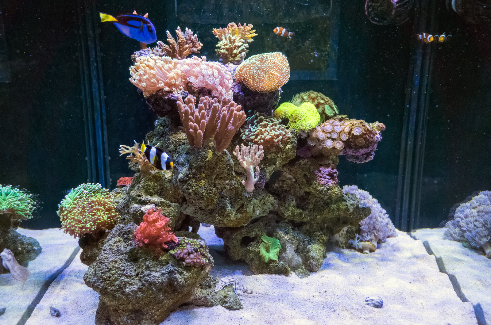 海水缸紀錄(滿 5 個月又 6 天)