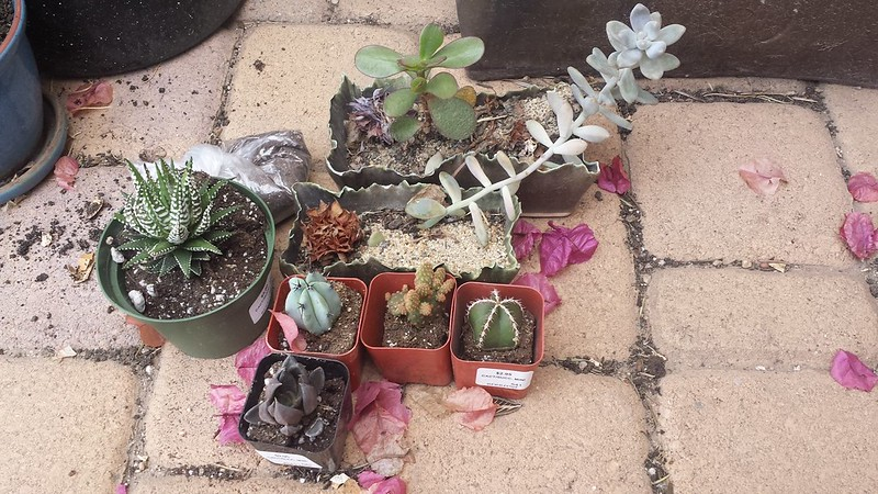 Just a few more succulents and cacti