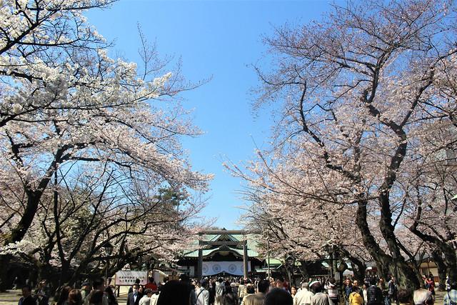 yasukunijinja-gosyuin020