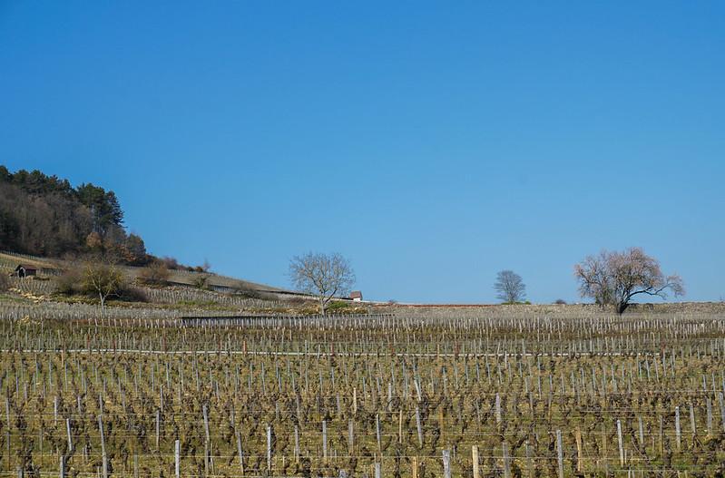 Bourgogne-9-2.jpg
