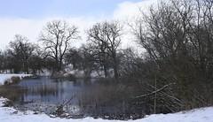 Winterspaziergang - Am Teich auf der Weide; Bergenhusen, Stapelholm (21)