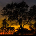 Sunset Trees by Chris-Creations