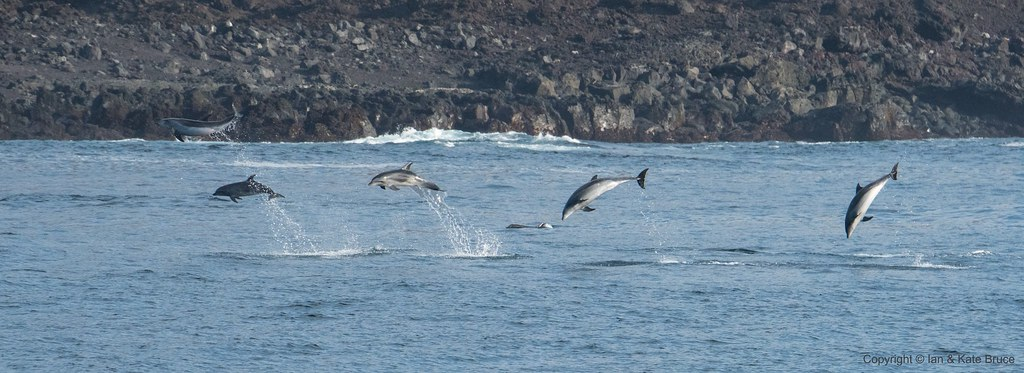 Dolphins at the Equator   Exactly as we began to celebrate c…   Flickr