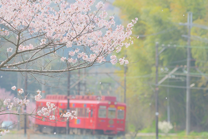 2018 春の貴志川線