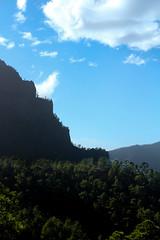 Las Palmas mountain trees