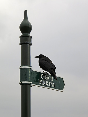 A crow supervises the parking on the signs leading to the Cliffs of Moher, Ireland