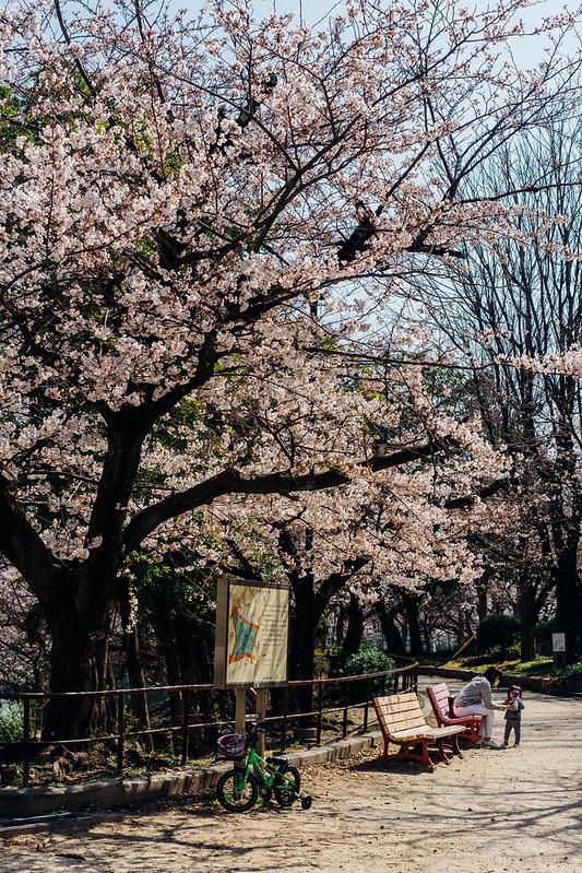Sakura04_55mm