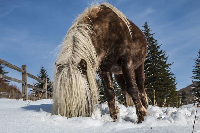 pony longhair