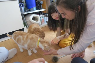 Garcia Girls at a Cat Cafe in Tokyo
