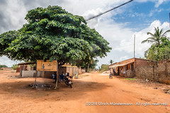 A big tree at a corner of two streets in Togoville, Togo