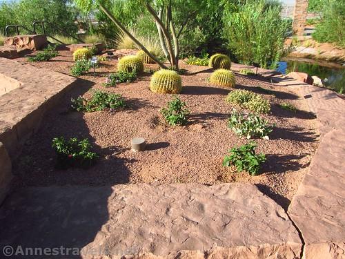 Cacti in a desert bed in the Red Hills Desert Garden of Pioneer Park, Utah