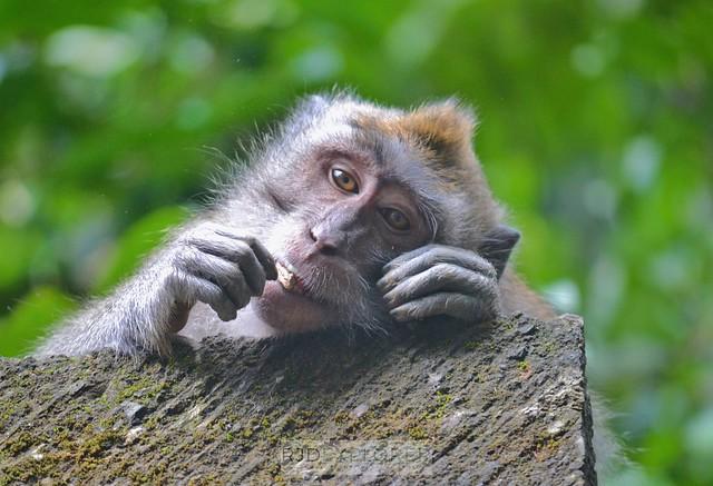 bali itinerary ubud monkey forest
