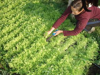 Cutting Salad