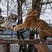YWP: Tiger Tantrum 1