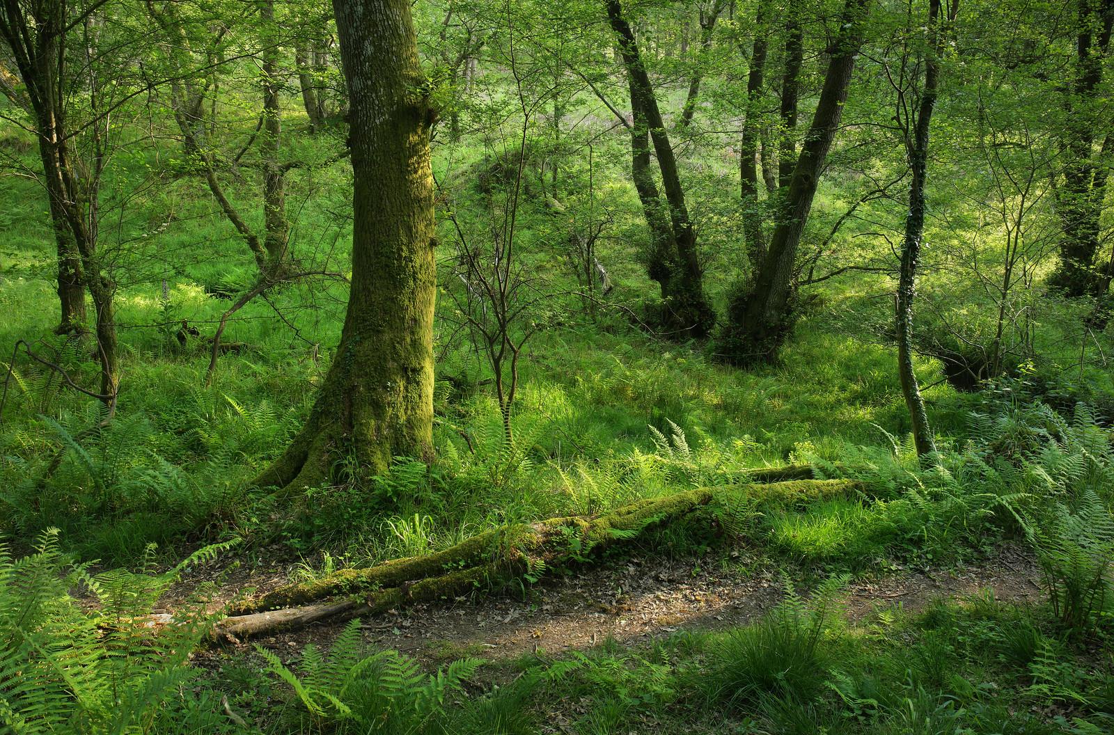 High Weald Woodland