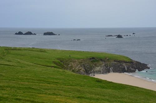 Blick auf eine Bucht, in der Seehunde zu sehen sind.