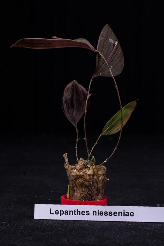 Orchideen-Neuzugang 2 40283313244_e61e145e26_c