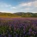 Depth Of Field by jojo (imagesofdream)