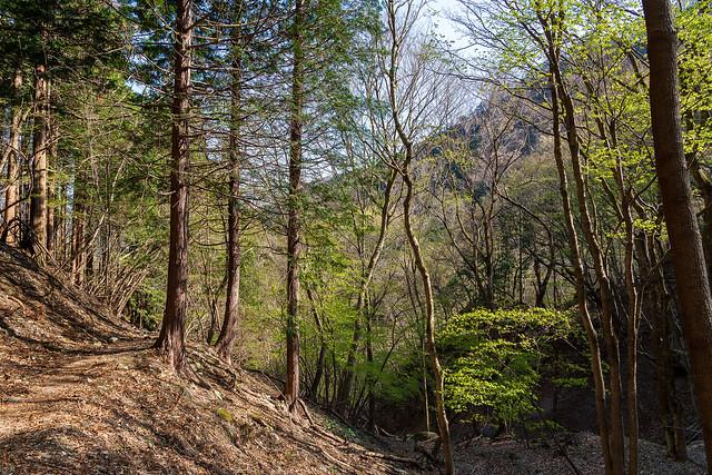 芽吹き始まる山道
