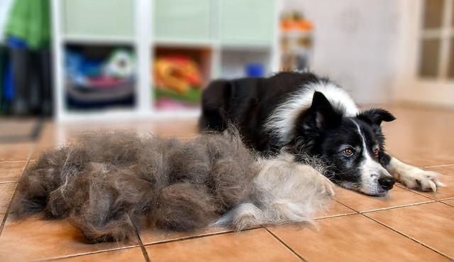 103/365 - Animal (Dog and a Half)!