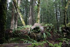 IMG_4245-Humbolt Redwoods State Park