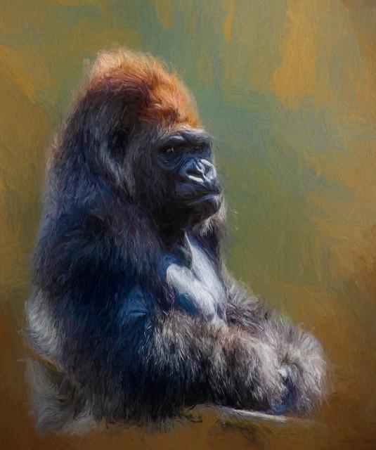 gorillajaibckgcanvas24paintedphoto