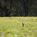 Small photo of Hare
