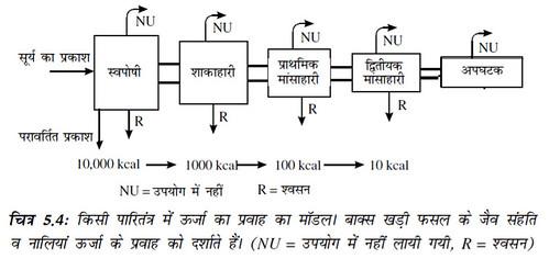 चित्र 5.4 किसी पारितंत्र में ऊर्जा का प्रवाह का मॉडल