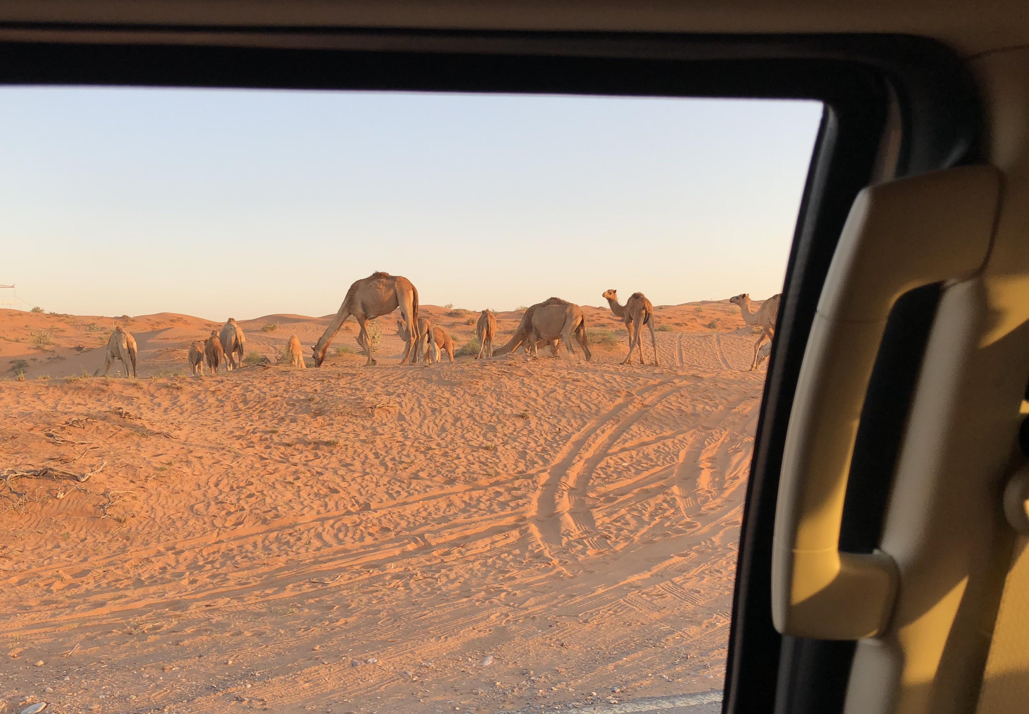Ras Al Khaimah, UAE, 2018 92