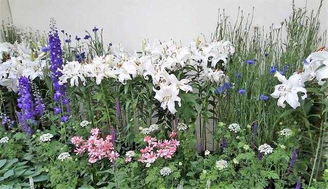 濱松花卉主題公園 (6)