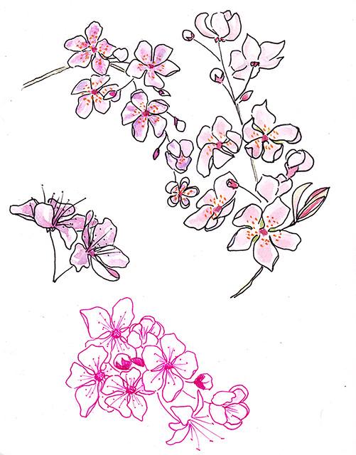 blossom sketch 1