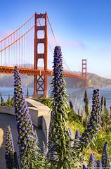 Golden Gate Bridge from behind Welcome Center