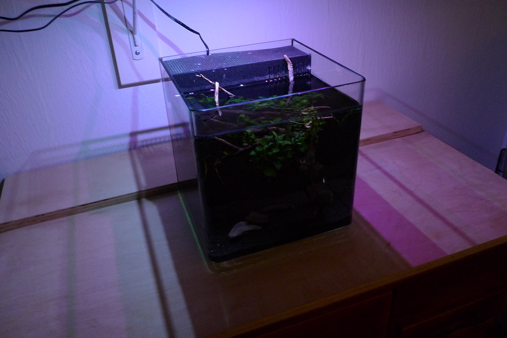 Fluval Plant Spectrum Led New Model Page 8 The Planted