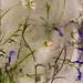 18 Ice flowers-1.jpg by lynnetteroberts1
