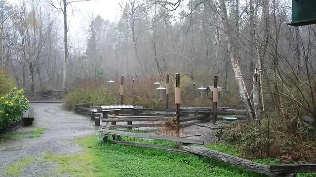 Richmond Nature Park in the rain