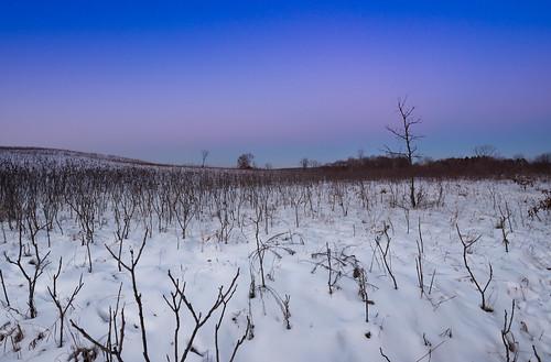 minnesota williamobrienstatepark landscape snow sunset winter