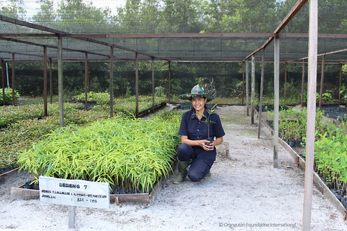 Employee Spotlight employee of the month Ibu Cici Orangutan Foundation International herbarium Reforestation Project