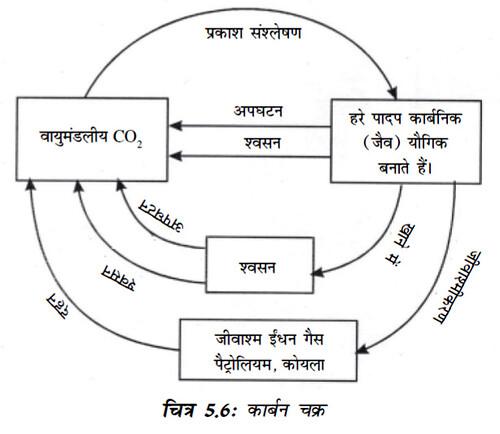 चित्र 5.6 कार्बन चक्र