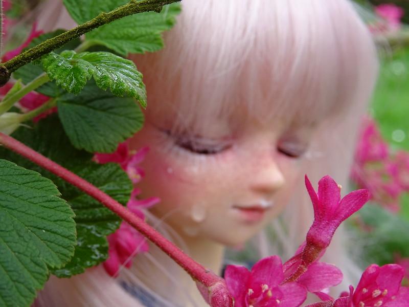 [Volks MSD Myu Sweet Dream] Ombéline p.4 + vidéo bas de page - Page 4 39691880560_2a155c92c2_c