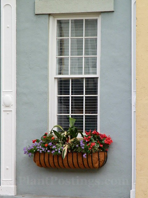 window box 3