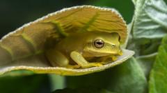 2018 frog season