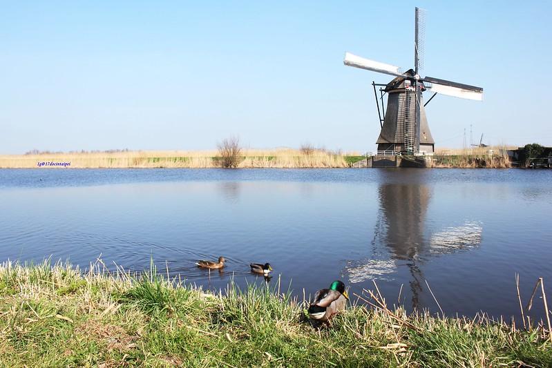 travel-Netherlands-Rotterdam-Kinderdijk-BLOG-17docintaipei (22)
