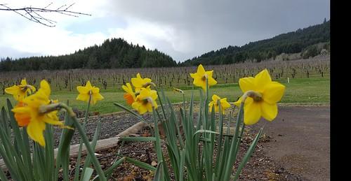 Flowers & Proto Wine