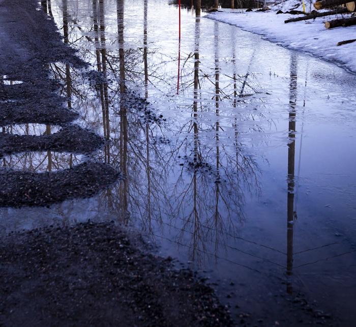 heijastus huhtikuu vesilammikko tulva puut